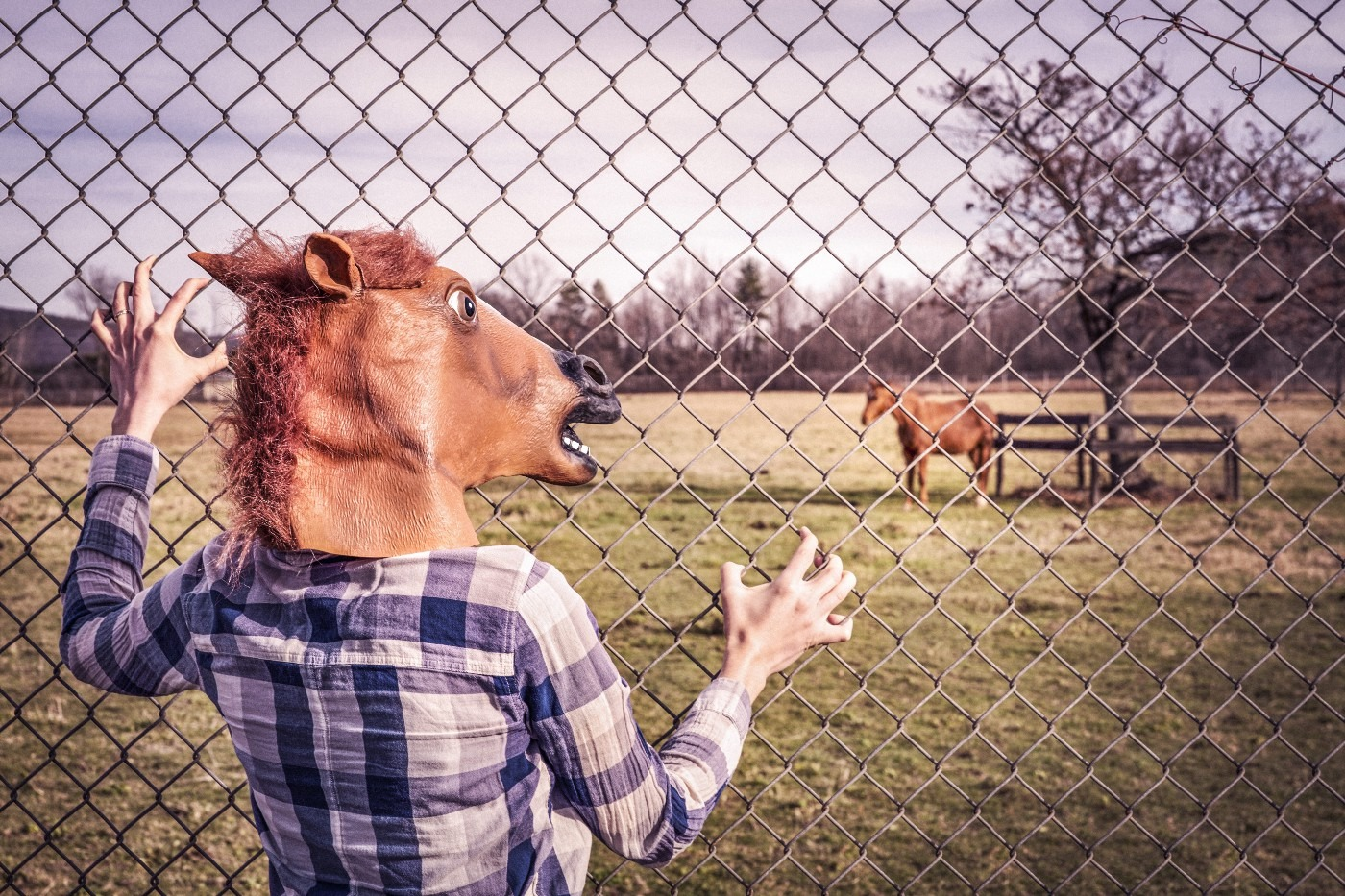 Person Imitating Horse