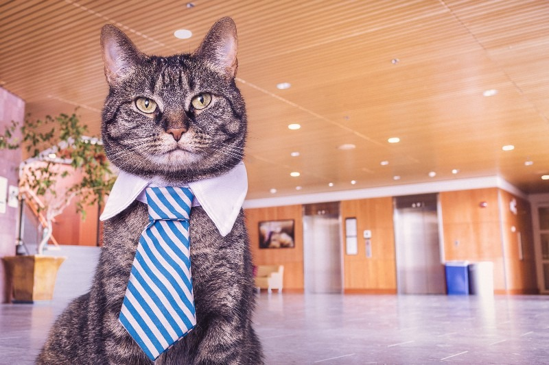 Cat with a tie on in an office